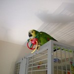 hotel polly guest parrot