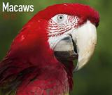 Macaw Parrot Calendar 2015