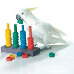 teacher toy parrot training
