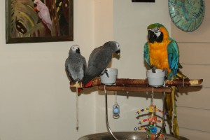 Alfie and Grasie parrot enrichment
