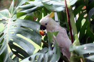 Lily parrot enrichment