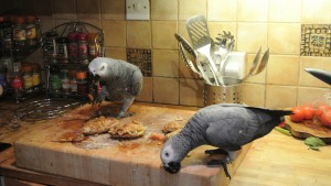 selffedding birds parrot enrichment