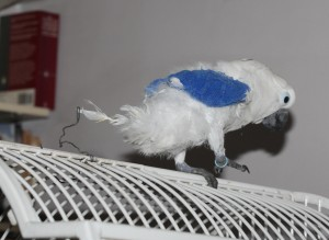 Cockatoo on a cage