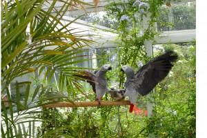 aviary to keep birds happy