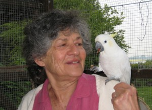 Cockatoo on the arm