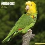 Amazon parrot calendar