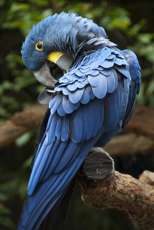 parrot sac a dos
