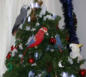 African Grey and Cockatoo parrots on Christmas tree