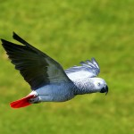 Parrot Species Threat