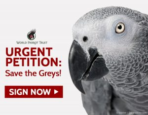 African Grey Parrots Petition