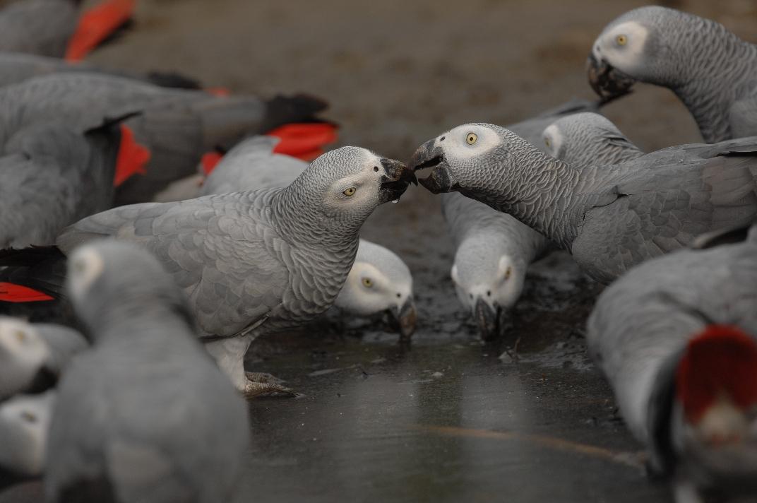 Parrot Food Uk