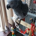 Parrot Essentials Testimonial by Emma