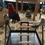 Tabletop Parrot Stand with Toy Hanger & Feeder - Coppertone