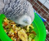 What should I feed my Parrot?