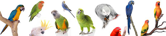 Which Parrot Species Should You Choose