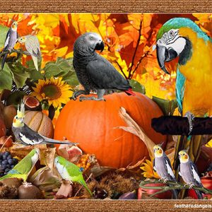 Parrots Halloween Safety Guide