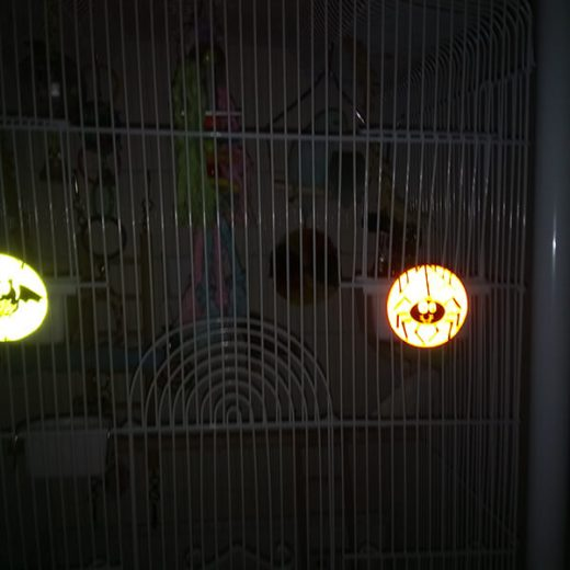 Halloween Parrot Picture Competition Entry 11