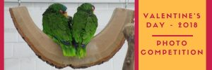 Valentine Parrot Picture Competition