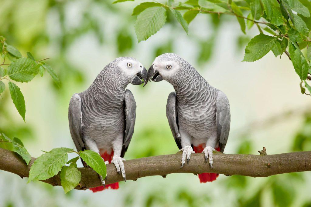 Parrot Have Social Intelligence