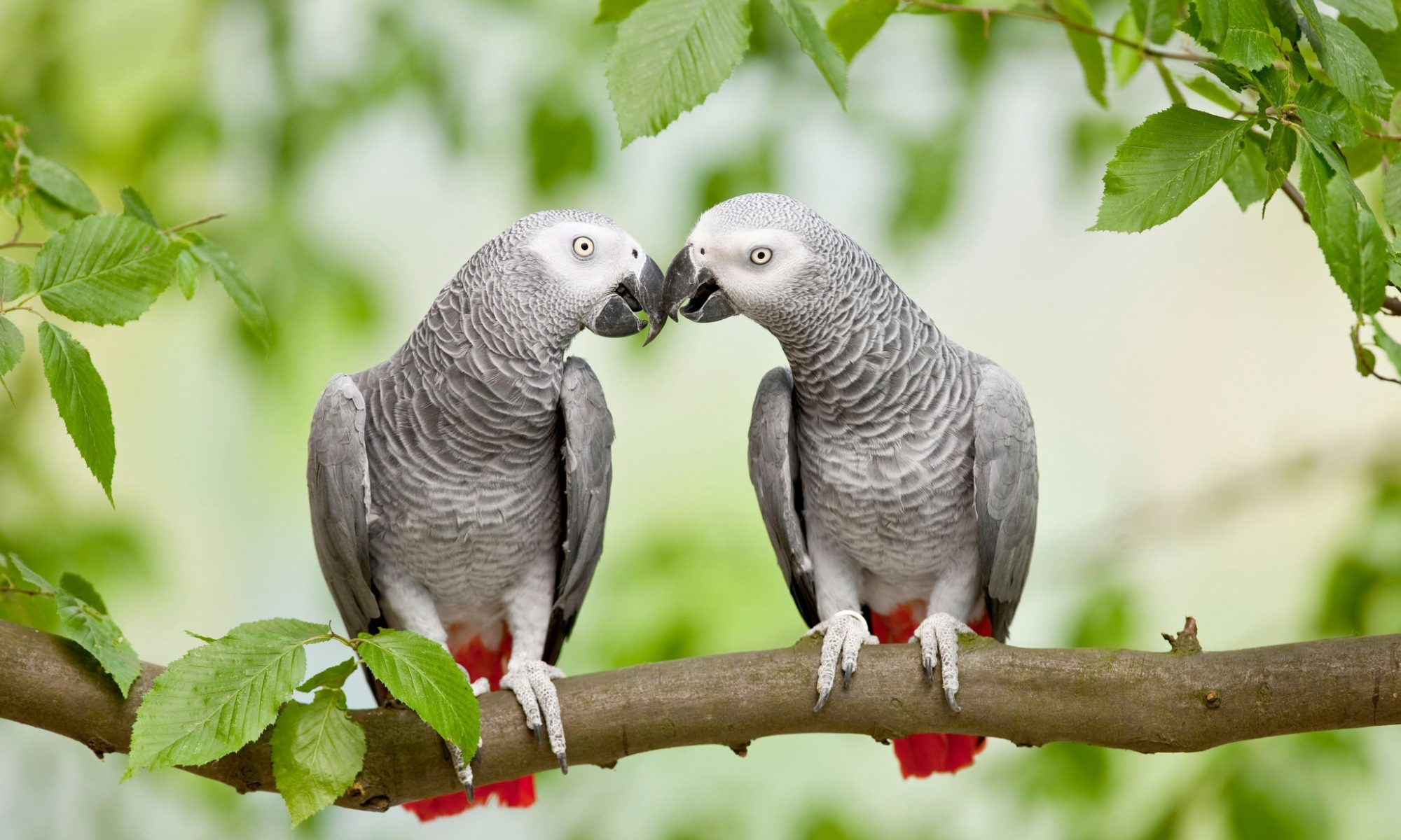 Parrot Have Social Intelligence