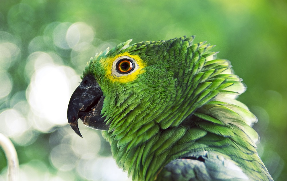 Close-up of green parrot with shallow focus