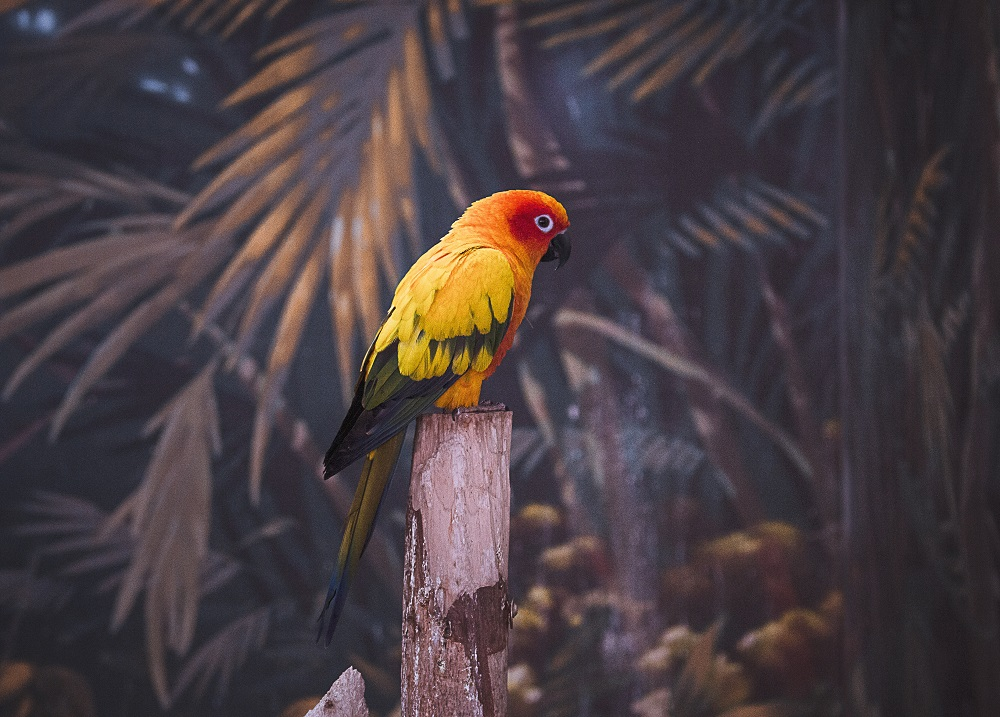 Sun conure parrot perched on wood pole with tropical wallpaper background.