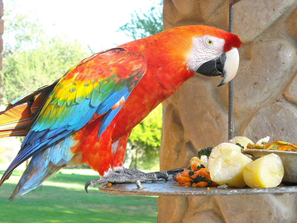 Macaw parrot with a variety of fruit and veggies.