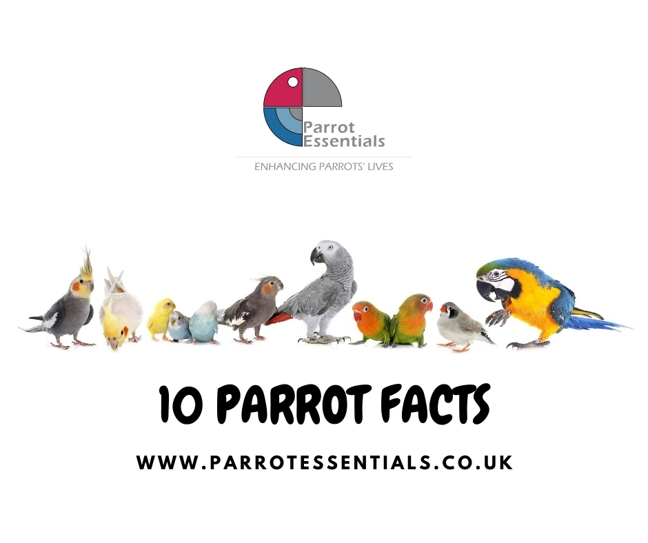 10 Parrot Facts