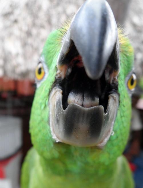 Parrot-bites-1 - Parrot Essentials - photo#36