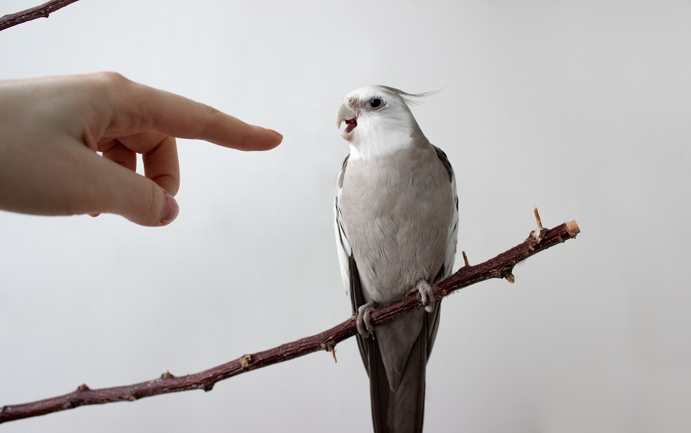 Parrot biting | How to prevent it