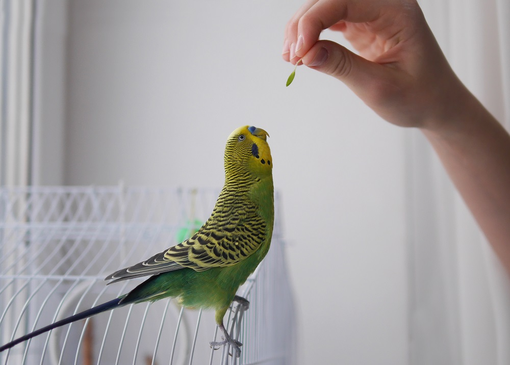 How to sprout seeds for your parrot