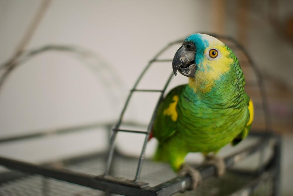Toxic parrot food