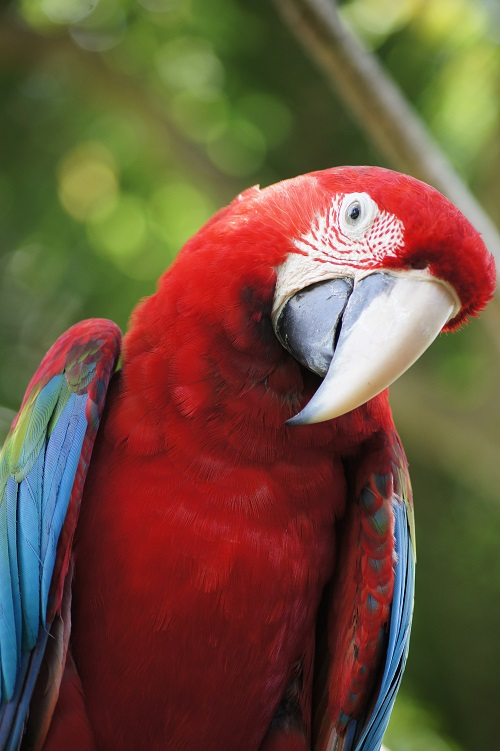 Macaw parrot | How to deal with parrot aggression
