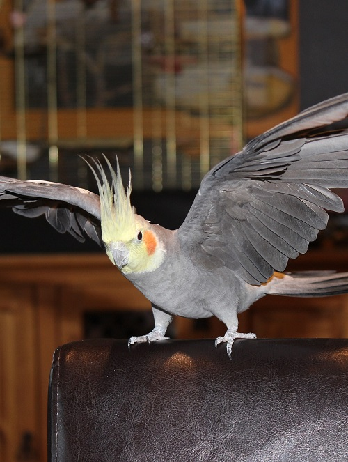 6 fun parrot activities to keep your bird fit by Parrot Essentials