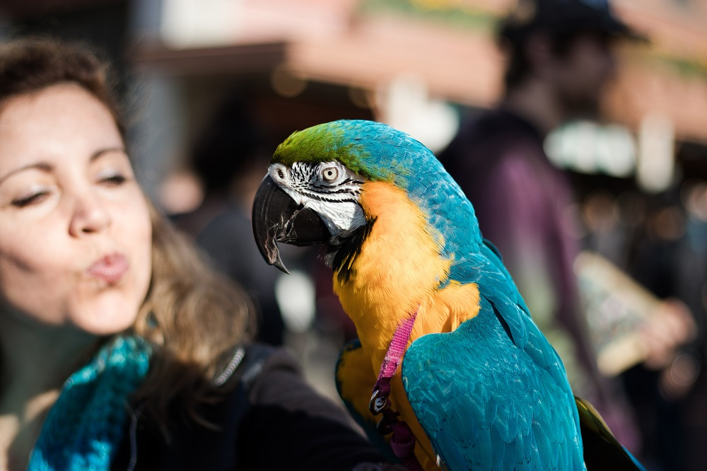 My Pet Parrot Stories by Parrot Essentials