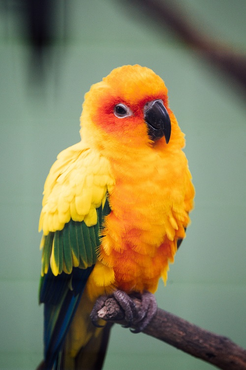 How to recognize and deal with a stressed parrot by Parrot Essentials.