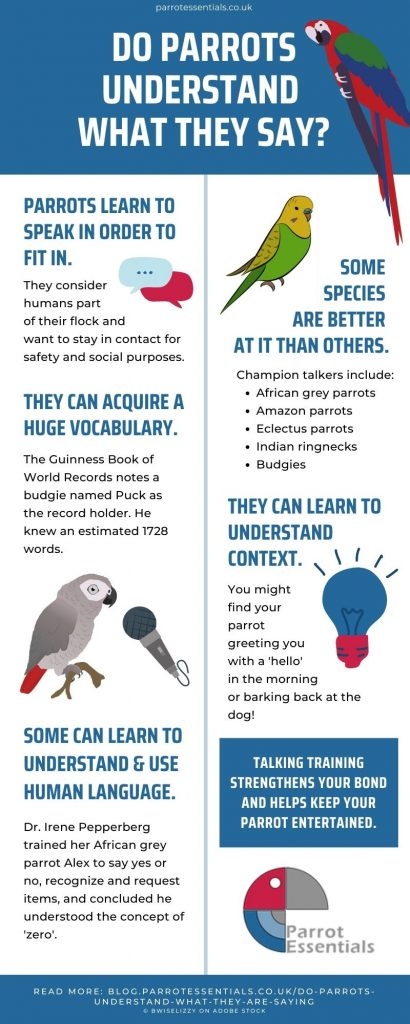 Do parrots understand what they are saying infographic