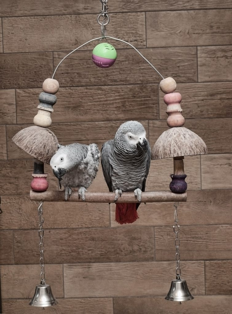 Toys for parrots | How to make sure they're safe